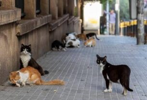 Cats are better than dogs (at catching the Coronavirus)