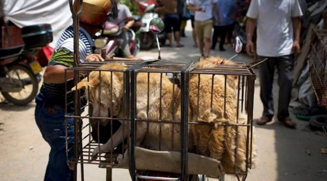 South Korea president considers ban on dog meat consumption