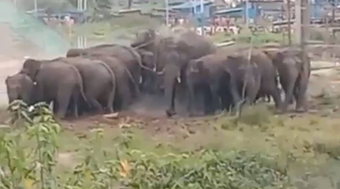 Watch: Herd of elephants shows up at under-construction IIT Palakkad campus