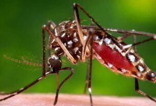 'India unlikely to get malaria jabs soon'