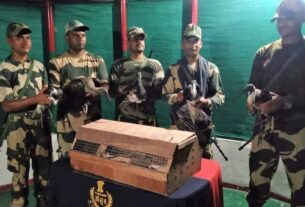 After crackdown on cattle-smuggling, Indo-Bangladesh border sees spike in wildlife trafficking