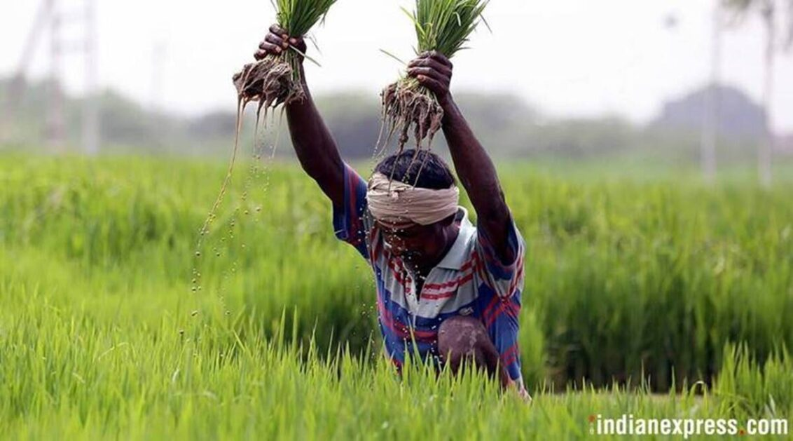 Centre delays paddy procurement, Punjab calls for order withdrawal