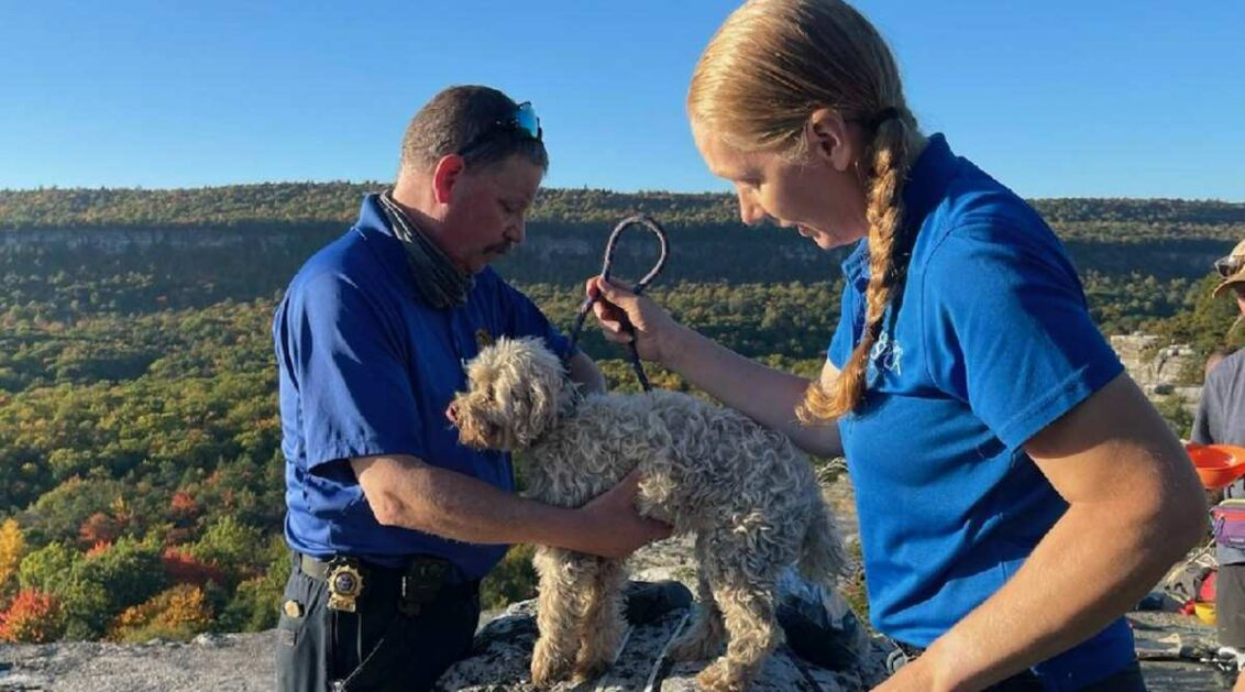 Lucky Dog! Pooch trapped in crevice 5 days rescued, unharmed